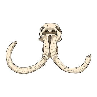 Crâne fossilisé de mammouth avec image de croquis dessinés à la main de défenses. dessin d'image fossile d'os d'animaux. silhouette de contour de stock de vecteur
