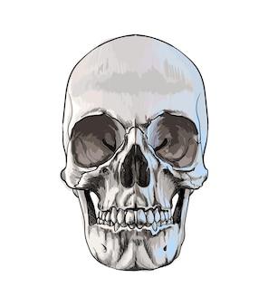 Crâne humain aquarelle sur blanc