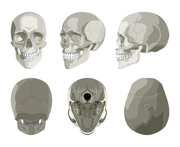 Crâne humain dans différentes projections