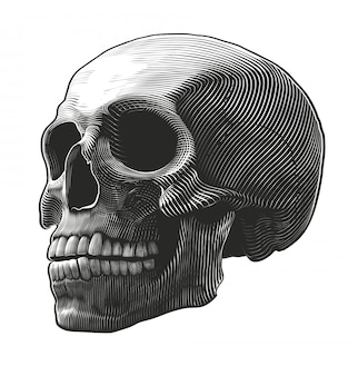Crâne humain dans le style de gravure