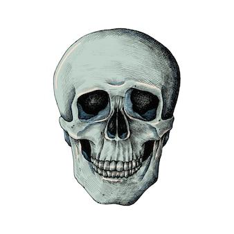 Crâne humain dessiné main isolé