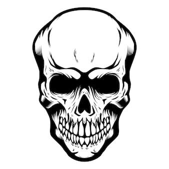 Crâne isolé sur blanc