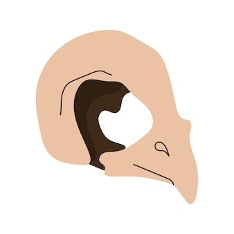 Crâne d'oiseau. éléments de conception magique de sorcellerie. illustration de dessin animé dessiné à la main de vecteur.
