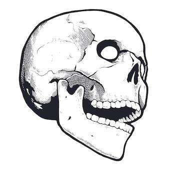 Crâne De Style Gravure Avec Bouche Ouverte. Noir Et Blanc Vecteur Premium