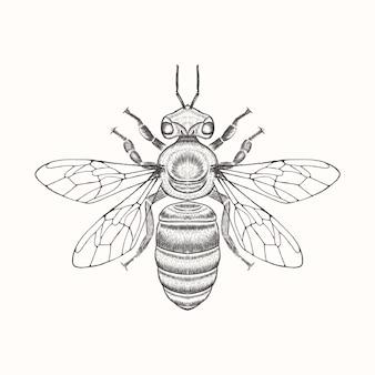 Création de logo d'abeille dessiné main vintage
