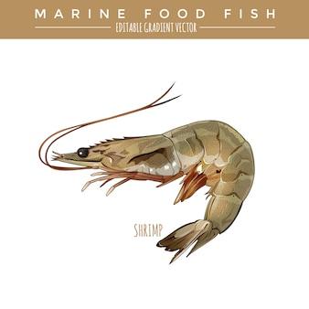 Crevette. marine food