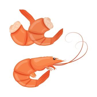 Crevettes bouillies. crevette tigrée cuite. crevettes isolées sur fond blanc. illustration.