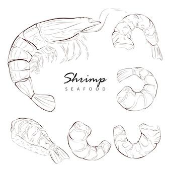 Crevettes, éléments isolés pour la conception sur fond blanc. ensemble, illustration dessinée à la main.