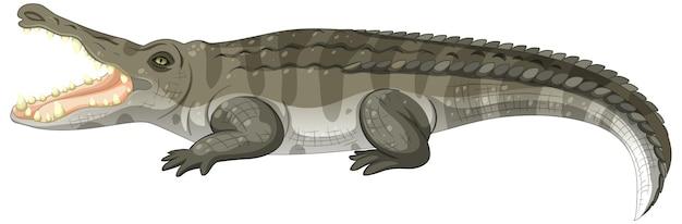 Crocodile adulte isolé sur fond blanc