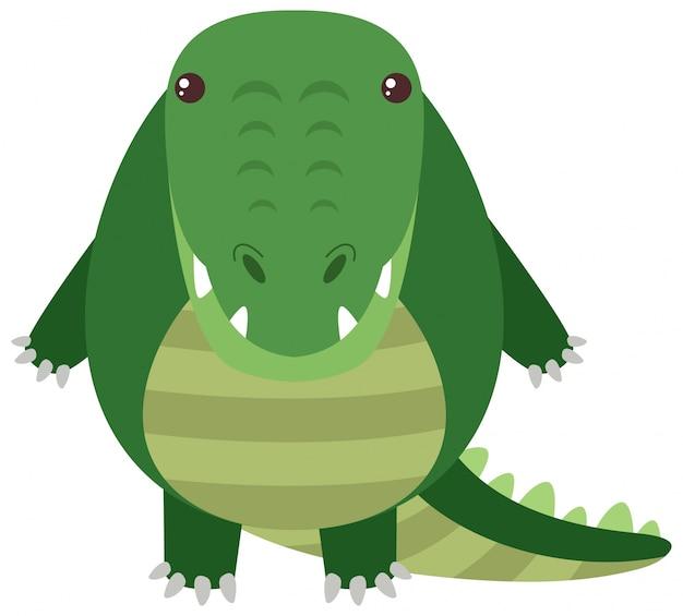Crocodile avec corps rond