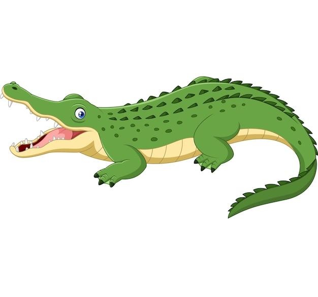 Crocodile de dessin animé isolé sur fond blanc