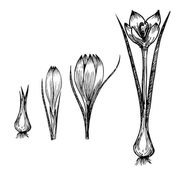 Croissance des plantes à fleurs sur blanc