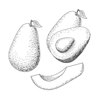 Croquis d'avocat dessiné à la main. dessin de nourriture de fruits d'été tropicaux.