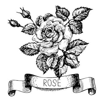 Croquis de bannière rose florale avec ruban. illustration dessinée à la main
