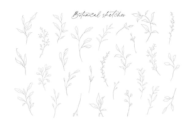 Croquis botaniques de brindilles et de branches avec des feuilles