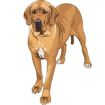 Croquis chien domestique faon great dane race