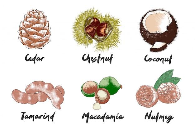 Croquis colorés de nourriture dessinés à la main