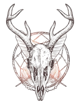 Croquis de crâne de cerf isolé sur blanc