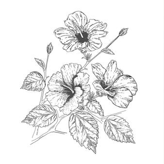 Croquis et dessin à la main fleur d'hibiscus. illustration vectorielle de ligne art.