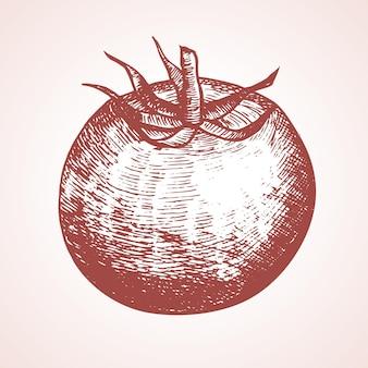 Croquis de dessin à la main de tomate et de tranche isolé sur fond blanc les aliments biologiques frais peuvent être utilisés pour le menu du restaurant. illustration vectorielle