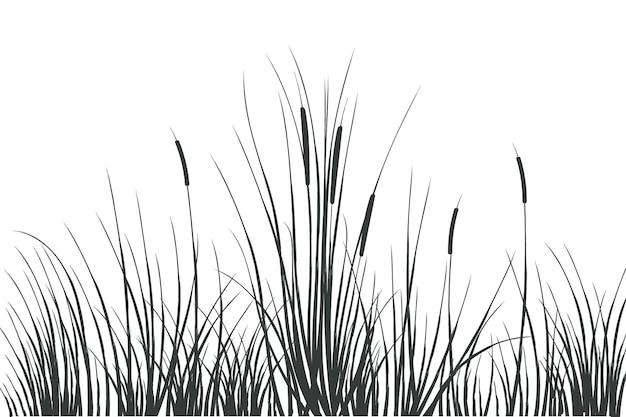 Croquis de dessin de main de vecteur avec des roseauxillustration de roseaux noirs et blancs