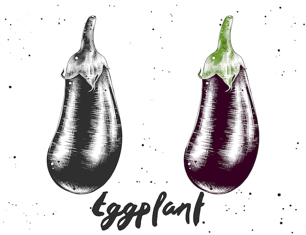 Croquis dessiné à la main d'aubergines en monochrome