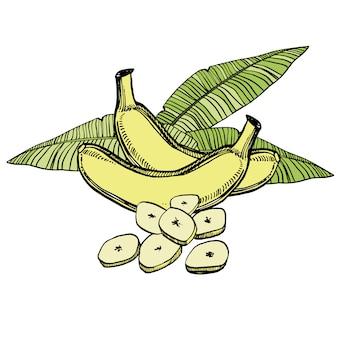Croquis dessiné main bananes avec feuille de palmier