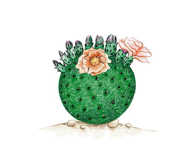 Croquis dessiné main de cactus en mousseline de soie orange