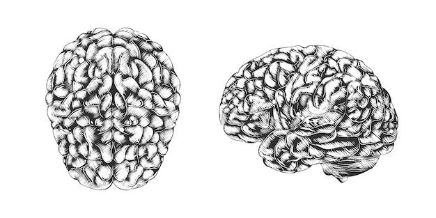 Croquis dessiné main de cerveau humain en monochrome