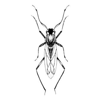 Croquis dessiné main de coléoptère avec des ailes.