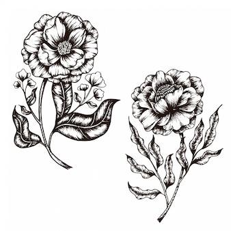Croquis dessiné à la main de la collection flower vintage style