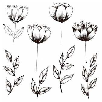 Croquis dessiné à la main de la collection vintage style de fleurs et feuilles
