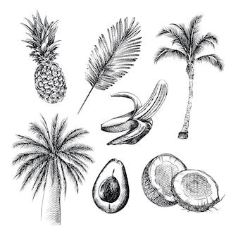 Croquis dessiné à la main du thème tropique. l'ensemble comprend ananas, palmier, noix de coco, avocat, banane, cocotier