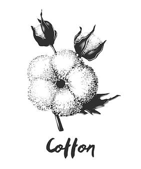 Croquis dessiné main de fleur de coton en monochrome
