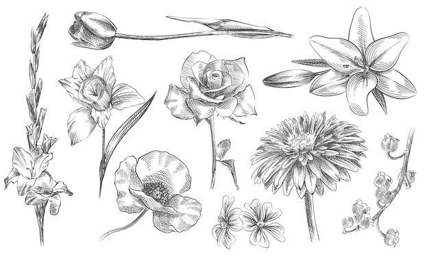 Croquis dessiné à la main de fleurs et plantes ensemble. l'ensemble comprend des roses, de la camomille, de l'orchidée, des chrysanthèmes, de la tulipe, du lys, de la calla, du papaver, de la rose chinoise, du muguet