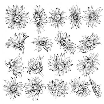 Croquis dessiné main de fleurs.