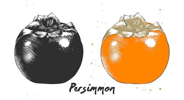 Croquis dessiné à la main de fruits de kaki