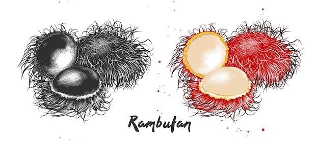 Croquis dessiné à la main de fruits de ramboutan