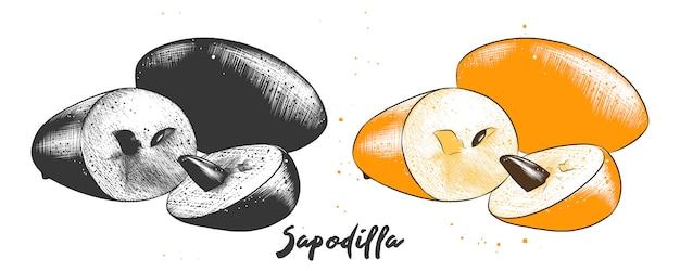 Croquis dessiné à la main de fruits de sapodille
