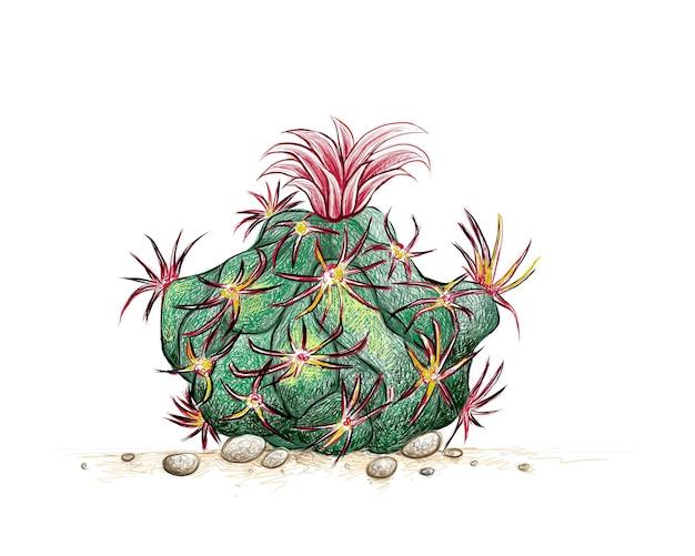 Croquis dessiné main de glandulicactus uncinatus cactus plant
