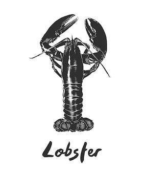 Croquis dessiné de main de homard en monochrome
