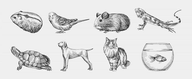 Croquis dessiné à la main de jeu d'animaux domestiques. l'ensemble se compose de hamster, cochon d'inde, lézard, tortue, chien, chat, aquarium avec poisson, perroquet