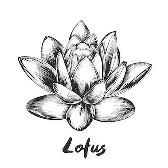 Croquis dessiné main de lotus en monochrome