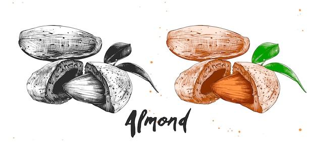 Croquis dessiné à la main de noix d'amande