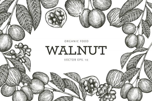 Croquis dessiné main noyer. illustration des aliments biologiques. illustration de noix vintage. fond botanique de style gravé.