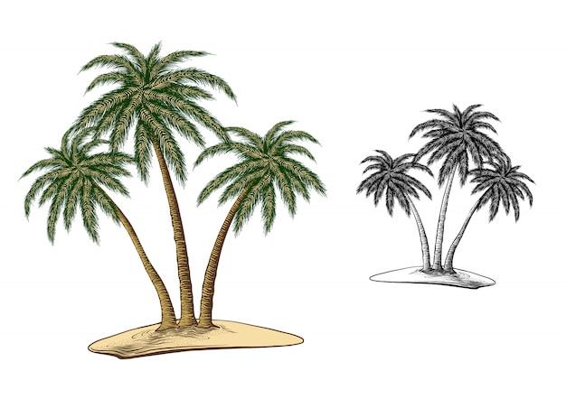 Croquis dessiné de main de palmiers en couleur, isolé sur blanc