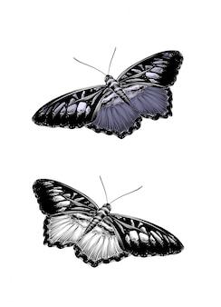 Croquis dessiné main de papillon en couleur.
