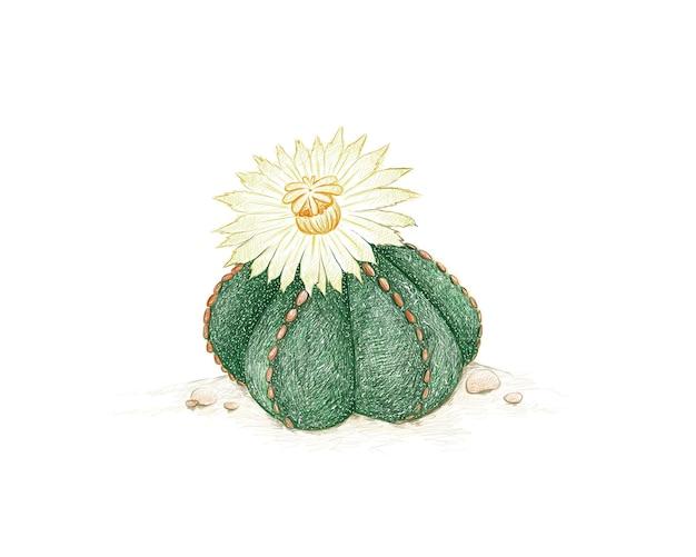 Croquis dessiné à la main de la plante succulente astrophytum myriostigma