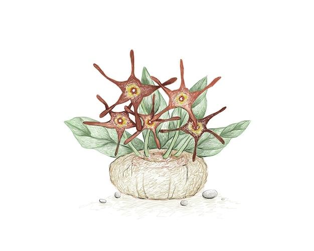 Croquis dessiné à la main de la plante succulente brachystelma barbarea