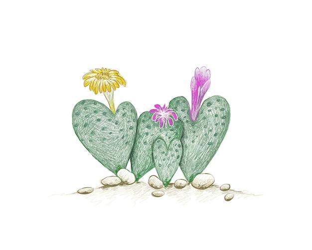Croquis dessiné à la main de la plante succulente conophytum cordatum